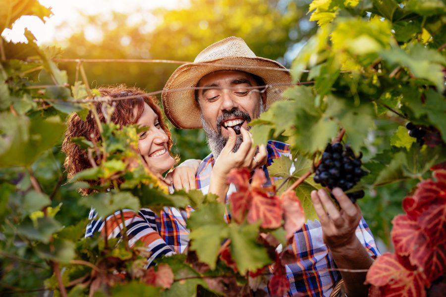 Vini biologici e biodinamici: scopri dove acquistarli