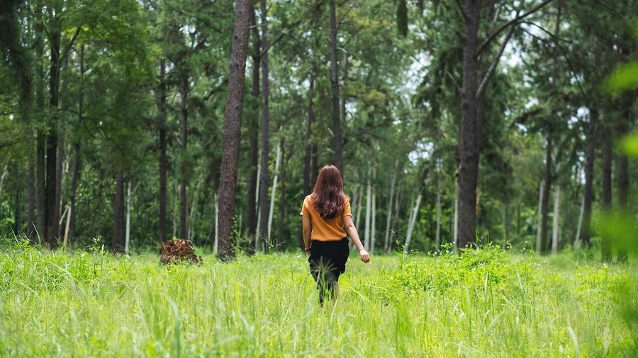 Shinrin-yoku, la camminata terapeutica nella foresta